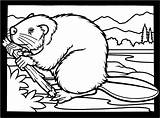 Coloring Beaver Pages Beavers Clipart Colouring Dam Printable Canadian Animals Wood Wildlife Funny Drawing Bever Clip Chewing Building Kleurplaat Puzzle sketch template