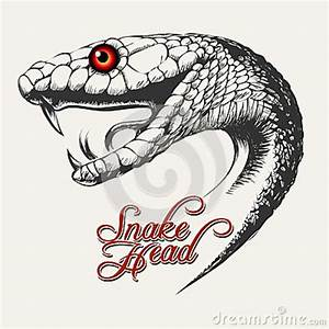 Drawn snake snake head - Pencil and in color drawn snake ...