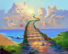 rainbow bridge for cats jimwarrren