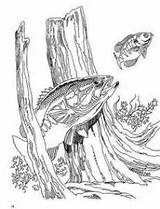 Coloring Adults Adult Bass Fish Fishing Burning Wood Patterns Pyrography Stencils Drawings Sheets Colouring Crafts Largemouth Carving Boat Outline Pattern sketch template
