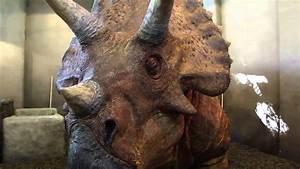 Triceratops Discovery Trail returns to IOA (VIDEO #2 ...