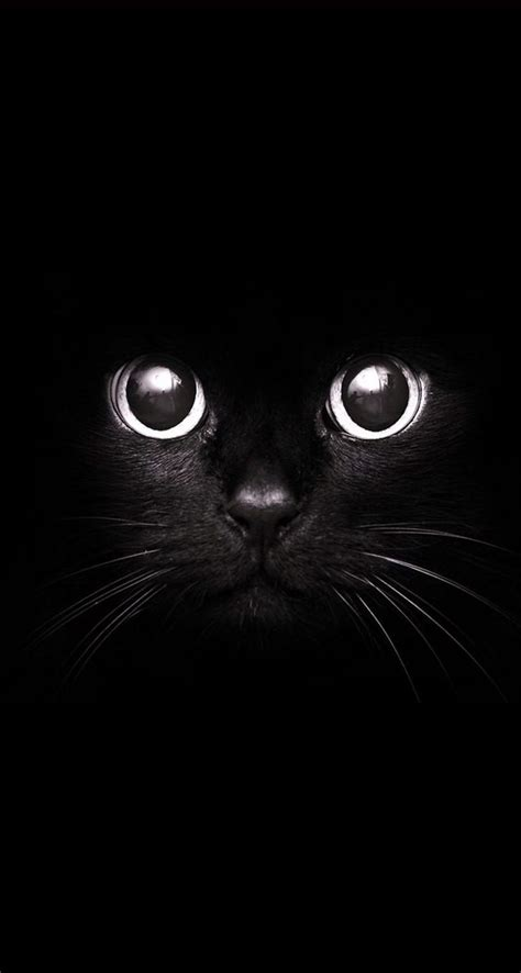 Phone Wallpaper Black Cat by The 25 Best Black Phone Wallpaper Ideas On