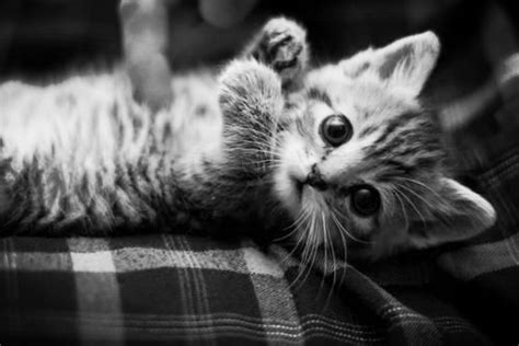cute kitten pictures   images  facebook