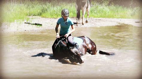 horses swimming taking