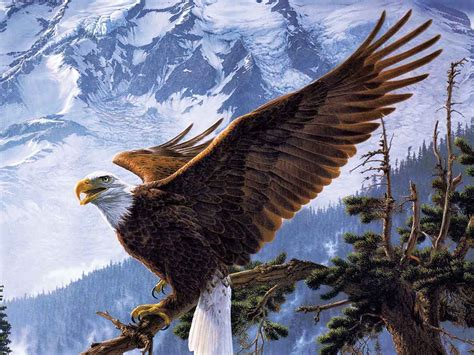 bald eagle wall decor nu venture llc