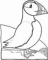 Puffin Coloring Pages Bird Puffins Printable Atlantic Print Crafts Sheets Birds Patterns Realistic Super Newfoundland Cartoon Animals Colouring Embroidery Quilt sketch template
