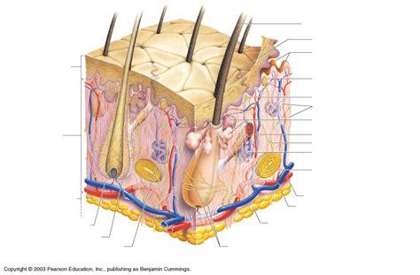 gentry teresa  anatomy diagrams