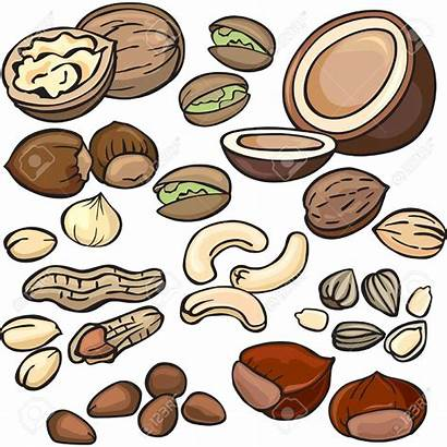 Nuts Nut Clipart Tree Clip Seed Seeds