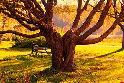 Trees Wallpapers Tree Nature Amazing Awesome
