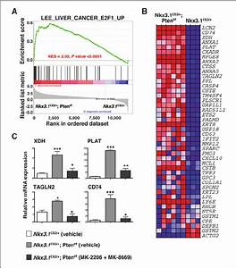 Analyses Of E2f1 Pathway Expression In Mouse Prostate