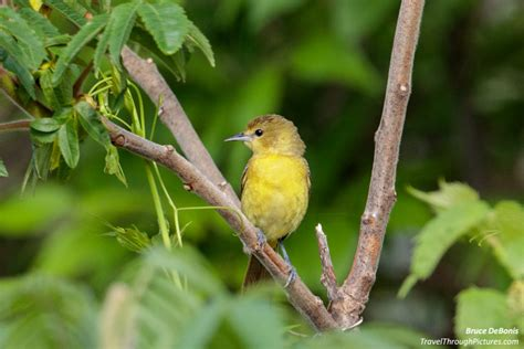 where to find the birds travel through pictures com