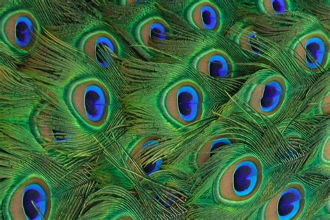 big room ideas the bold and the beautiful strutting with peacock