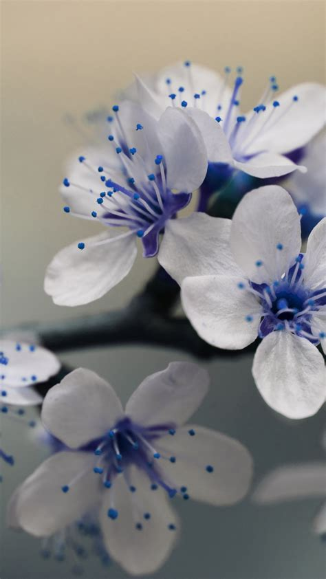 Bring your smartphone to life with an android flower background and experience flower images like you have never done before! Free HD Beautiful Blue Flowers iPhone Wallpaper For Download ...0314
