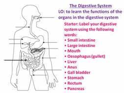 New AQA GCSE Biology Digestive System | Teaching Resources