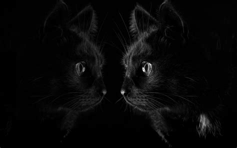 Background Black Cat by Wallpaper Black Cat Look At Mirror Black Background