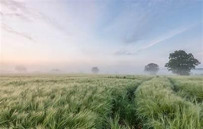 Barley Field Fog Trees Morning Telegram вконтакте