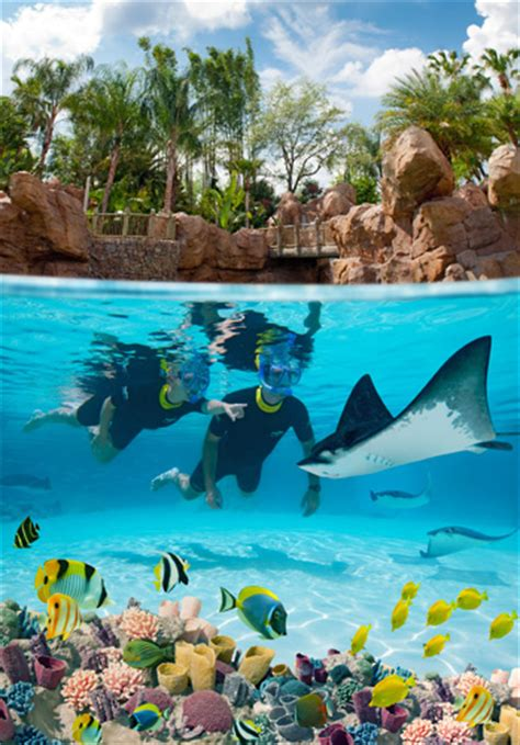 Discovery Cove Orlando Tickets by Discovery Cove Orlando Tickets Orlando Fl