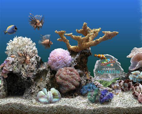 cuisiner le magret de canard ecran de veille aquarium 28 images images sim aquarium