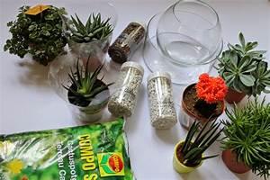 Sukkulenten Im Glas : siimply enjoy diy sukkulent im glas ~ Watch28wear.com Haus und Dekorationen
