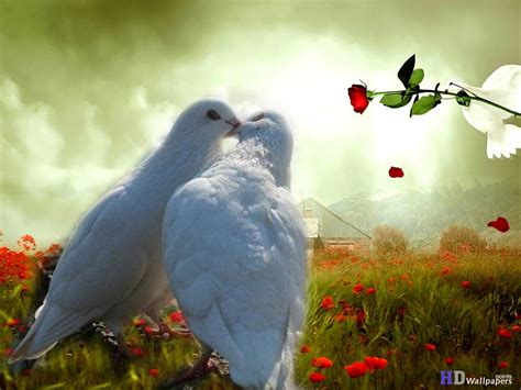 Dove Pictures Of Lovebirds Kissing Birds