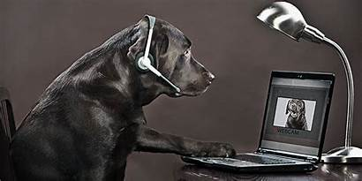 Backgrounds Call Virtual Dog Meeting Covid Brazos