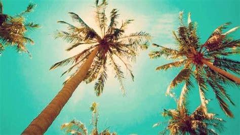 Tropical Tumblr  Google Search  Beach Vibes Pinterest