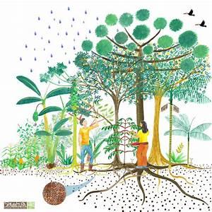 Agroforestry Design Agroflorestas Yamamoto