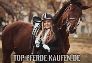 Auf Rechnung Bestellen Bedeutet : pferde kaufen eine weitere wordpress website ~ Themetempest.com Abrechnung