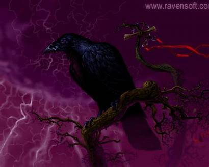 Raven Wallpapers Desktop Resolution Wallpapercave 1024 1280