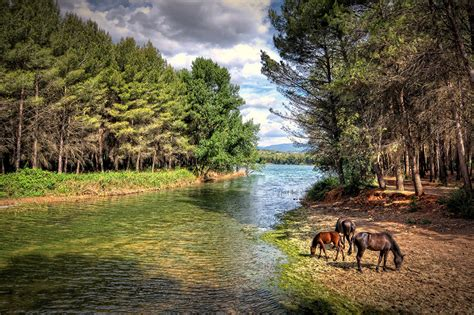 Forest With Animals Wallpaper - wallpapers horses forests rivers animals