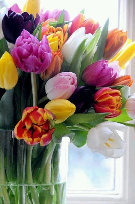 bonitas imagenes de tulipanes holandeses todo imagenes