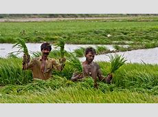 ADB to Help Improve Irrigation, Agriculture Production in