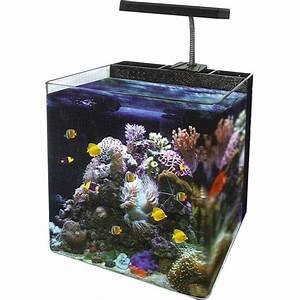 Nano Reef Tank 34 Litre -Amazing Amazon