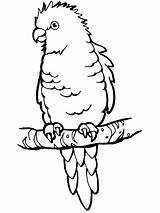 Papagei Papuga Pappagallo Kleurplaat Papegaai Ausmalbild Wellensittich Sitzender Papagaio Kostenlos Parkiet Spettinato Parrots Pappagalli Ausmalen Perched Mewarnai Burung Kakak Tua sketch template