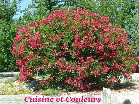 la cuisine est un laurier quot au jardin quot photo de couleurs quot ardèche