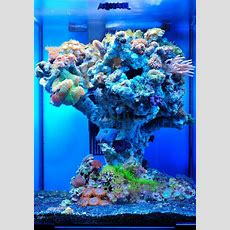 154 Best Awesome Reef Aquascapes Images On Pinterest