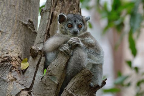 Tour To Berenty Spiny Forest In Madagascar Between