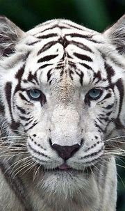iphone fish wallpaper | Animals beautiful, Cuddly animals ...