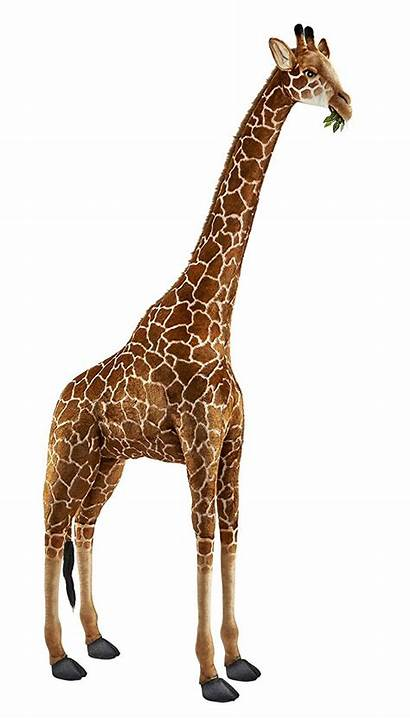 Giraffe Clipart Animal Stuffed Hansa Girafe Toys