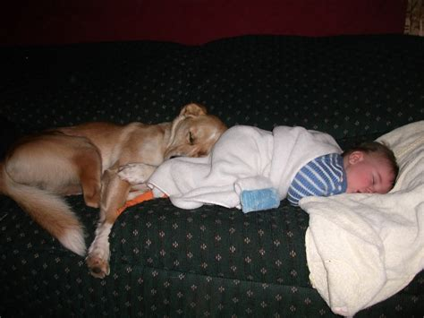 Sleep And Pets by Nap Time For And Their Dogs Cuteness Overflow