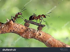 Powerpoint Template  Ants Cartoon