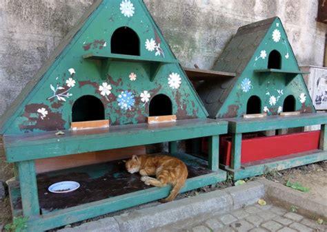 cabane pour chat coups de coeur abris pour chats errants association les chats du maquis