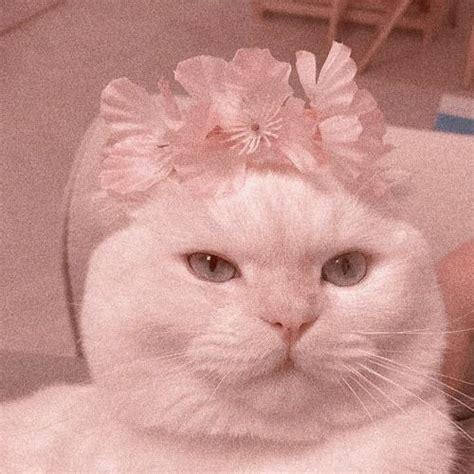 cat cats animal kitten pink aesthetic pinkaesthetic