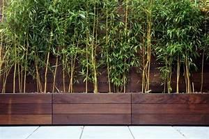 Bambus Als Sichtschutz Im Kübel : die 25 besten ideen zu bambus als sichtschutz auf pinterest bambusgarten bambus ideen und ~ Frokenaadalensverden.com Haus und Dekorationen