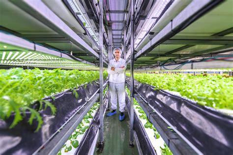Locally grown produce with a Vertical Farm in Copenhagen ...