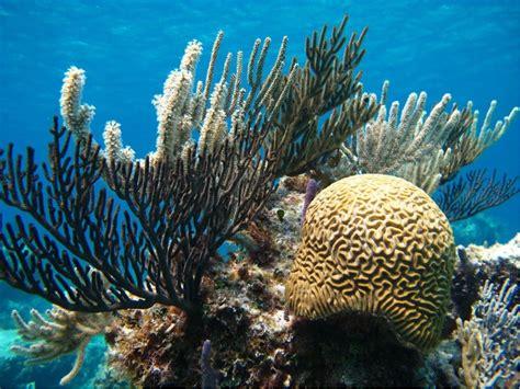 Bahamas Coral Reef Report Card • Scuba Diver Life