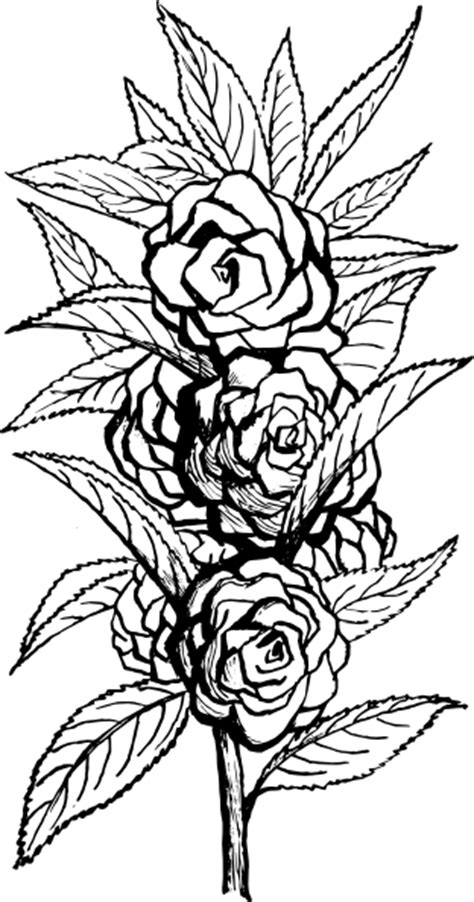 Black And White Floral Clip Art at Clker.com - vector clip