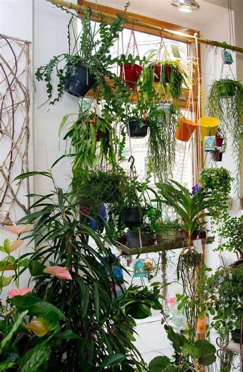Hängende Pflanzen Wohnung by Die Besten 25 H 228 Ngende Pflanzen Ideen Auf