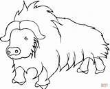Buffalo Yak Coloring Pages Printable Himalayas Cartoon Cow Template Popular Himalayan Getcoloringpages Coloringhome Preschoolers Sketch 973px 17kb 1200 sketch template