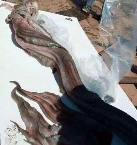 mermaid found jalpari mexico zimbabwe israel sightings truths interesting